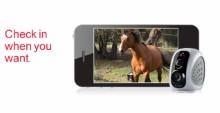 CCTV_Horse_Camera